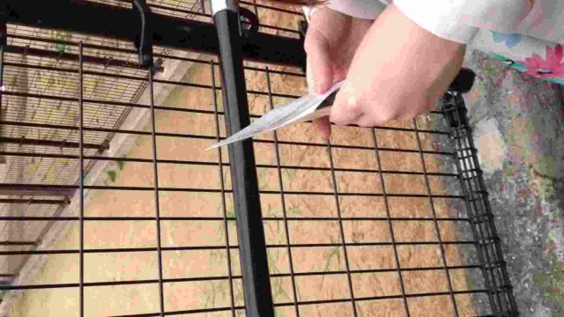 23(19日目)桜を見ながらお散歩 一般投稿  82pic 24