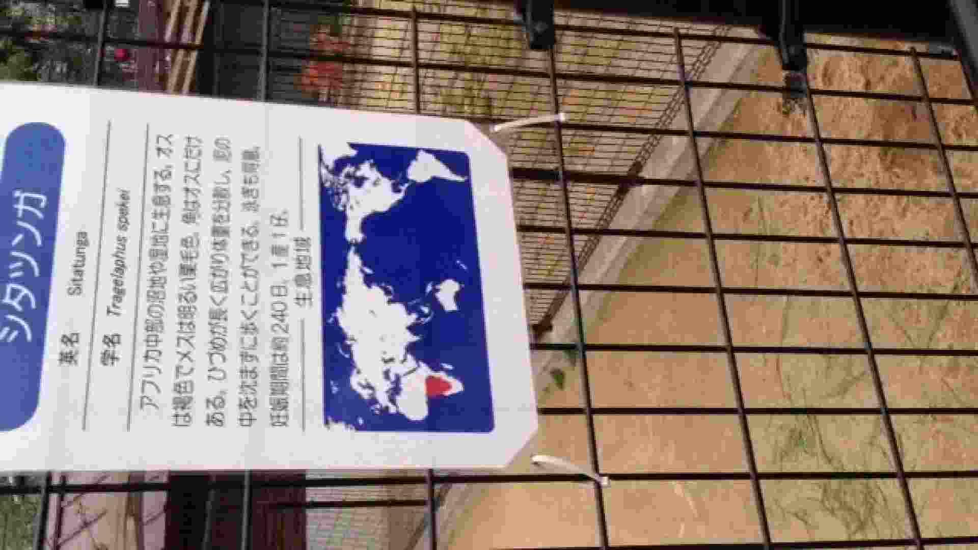 23(19日目)桜を見ながらお散歩 一般投稿  82pic 26