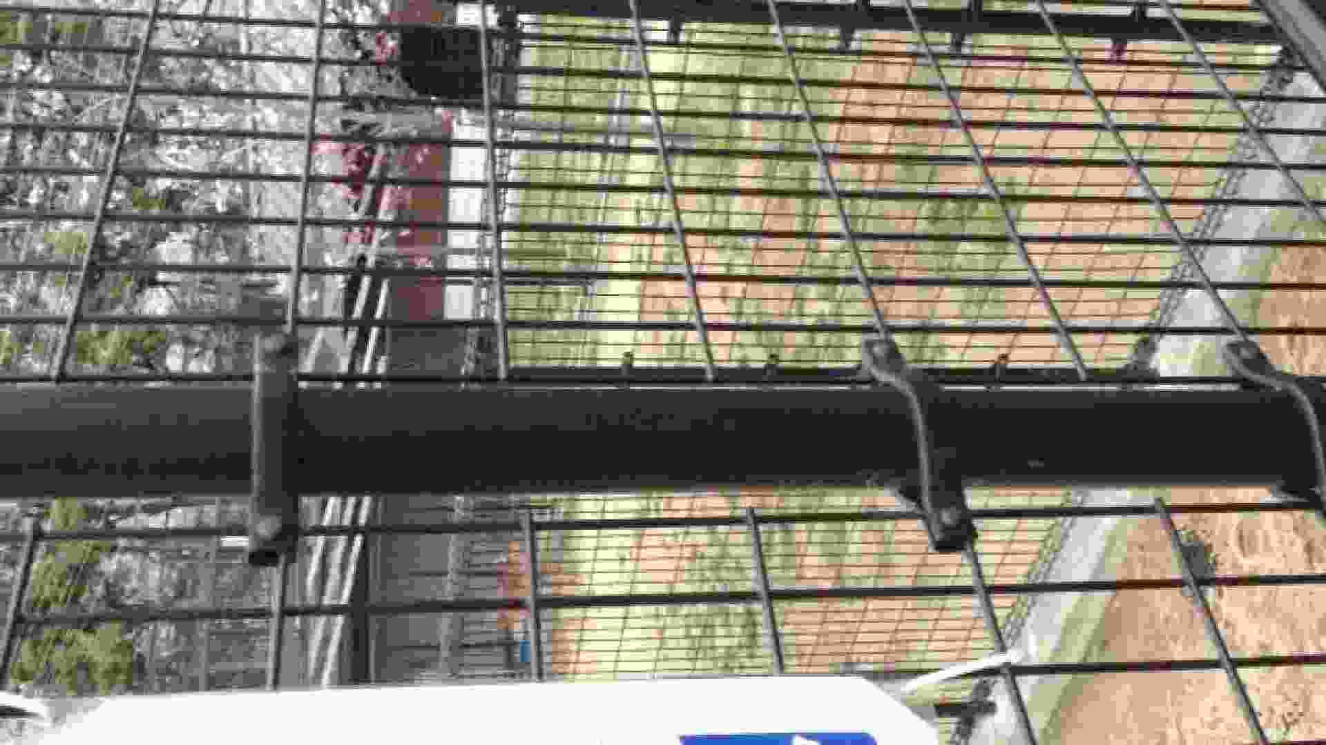23(19日目)桜を見ながらお散歩 一般投稿   0  82pic 27