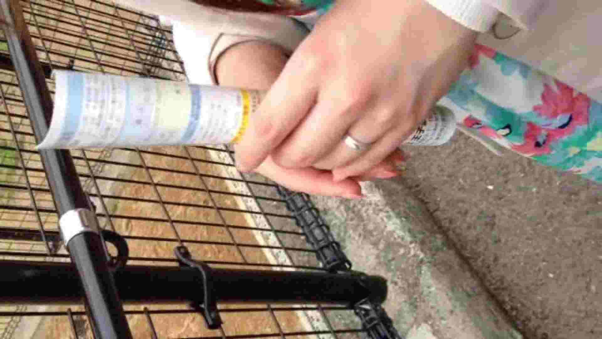 23(19日目)桜を見ながらお散歩 一般投稿  82pic 34