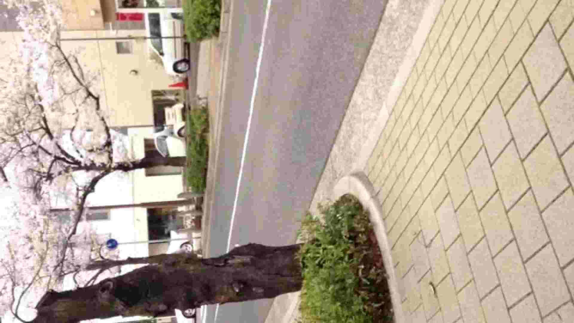 23(19日目)桜を見ながらお散歩 一般投稿   0  82pic 41