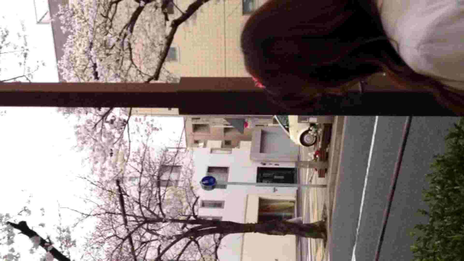 23(19日目)桜を見ながらお散歩 一般投稿   0  82pic 47