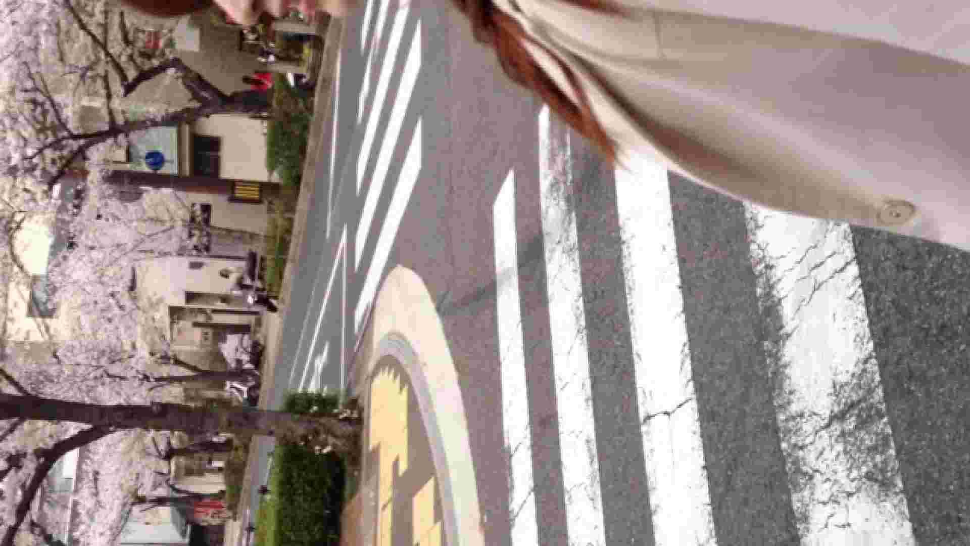 23(19日目)桜を見ながらお散歩 一般投稿  82pic 54